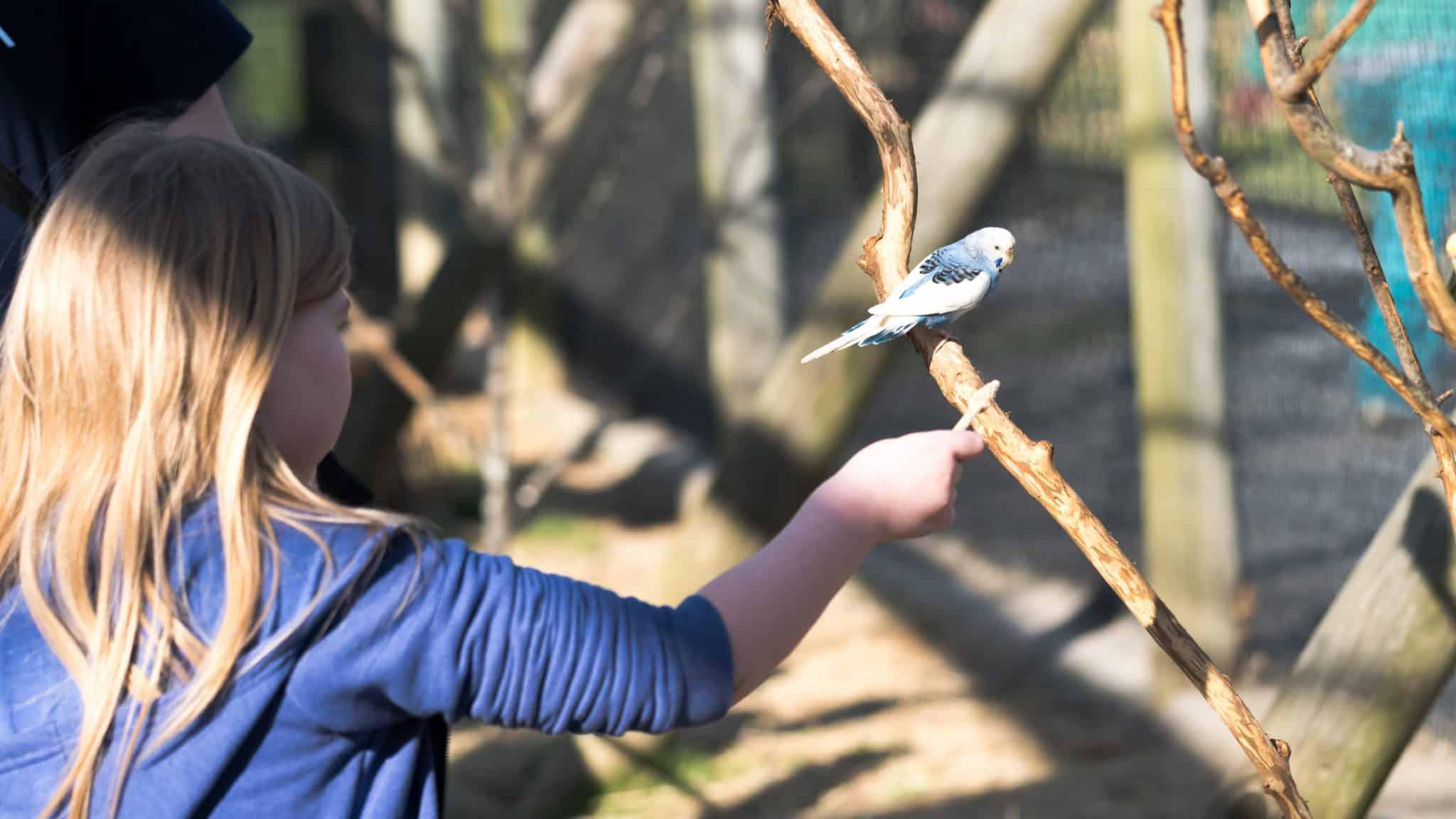 holding parakeet